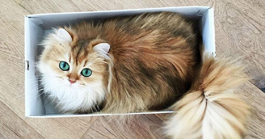 با «اسموتی» آشنا شوید؛ فتوژنیک ترین گربه جهان