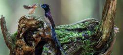 ثبت مهر مادری پرندگان در قاب دوربین