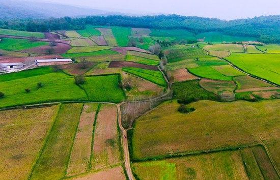 (تصویری فوق العاده از مزارع هزار جریب نکا از ارتفاع)
