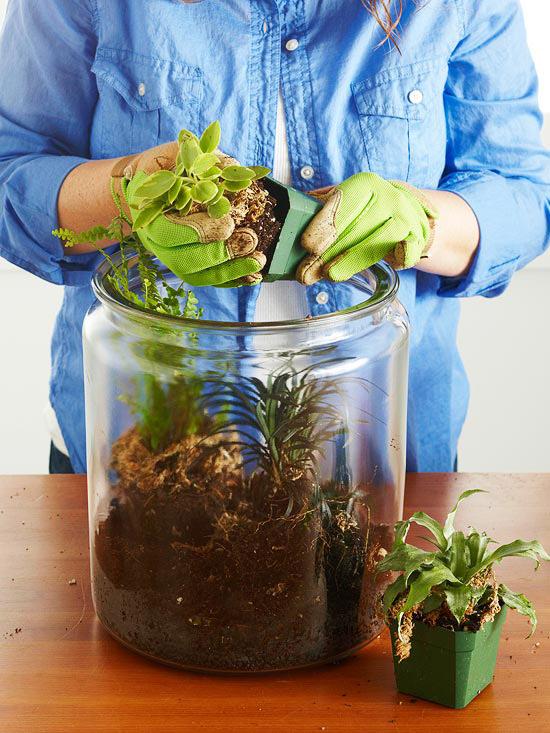گیاهانی که برای این منظور انتخاب نمودهاید را بهآرامی و بااحتیاط زیاد از گلدانهای پلاستیکی خود خارج کرده و درون خاک بکارید. اگر گیاه ریشهدار است، مطمئن شوید که ریشه بیرون نمانده باشد. بین گیاهانی که میکارید حتما فاصله بگذارید.