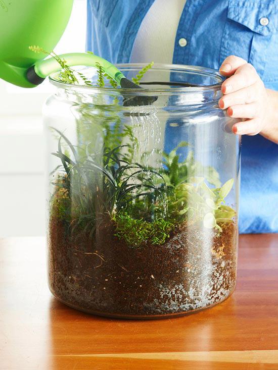در آخر نیز باید به گیاهان آبداده و گلدان را درجایی قرار دهید که نور غیرمستقیم آفتاب به آنها برسد. شرایط آبیاری تراریوم به محیط و گیاهانی که انتخاب کردهاید، بستگی دارد. اما همیشه پیش از آبیاری گیاه از خشک بودن خاک اطمینان حاصل کنید.