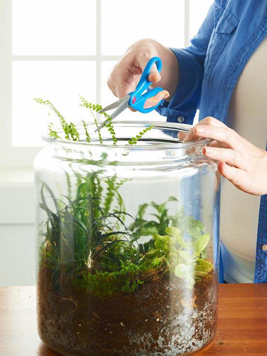 این را به خاطر داشته باشید که لازم است گیاهان تراریوم را هرچند وقتیکبار هرس نمایید.