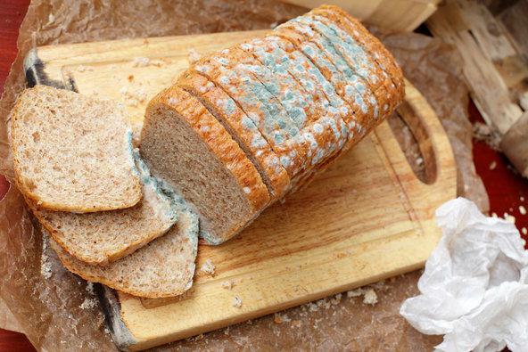 اگر نان کپک زده بخوریم، چه اتفاقی می افتد؟