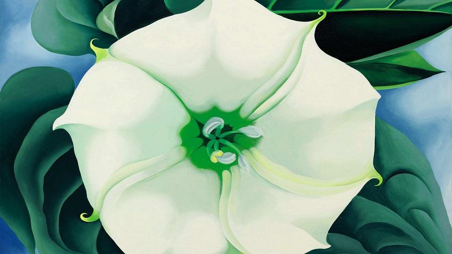 white-flower-no1