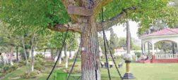 درختی که به اسارت گرفته شد