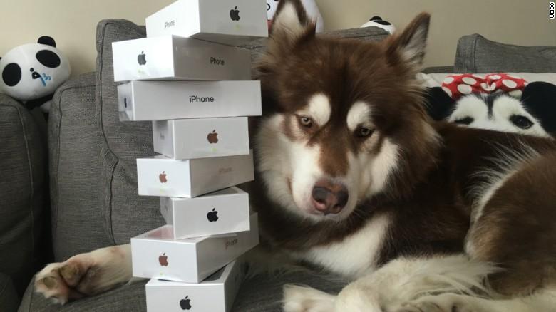 پسر میلیاردر چینی، برای سگش، ۸ آیفونِ ۷ خرید