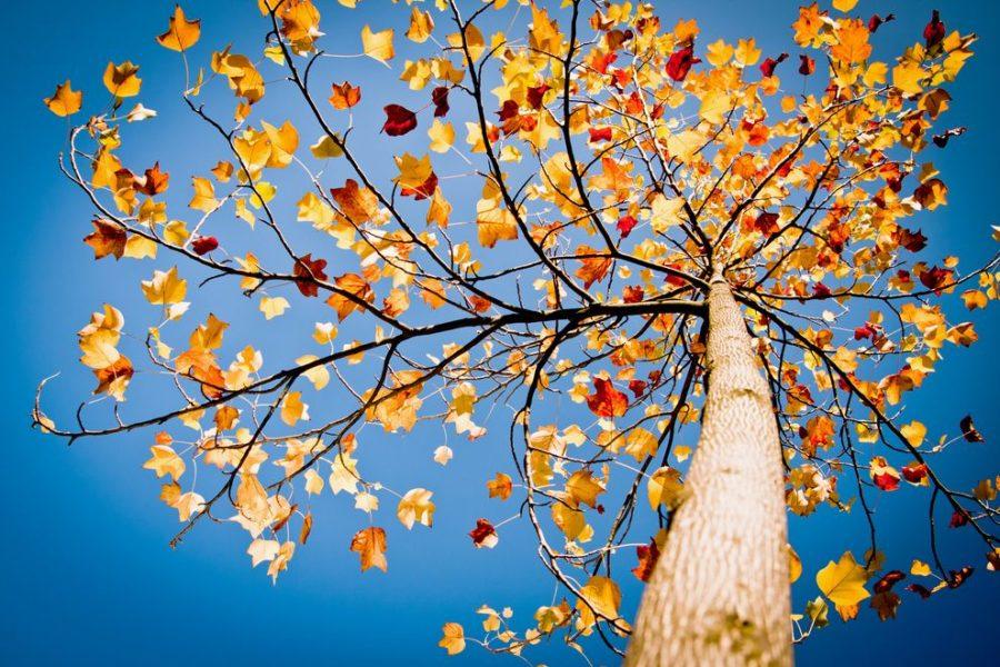 چرا آسمان در فصل پاییز آبی تر است؟