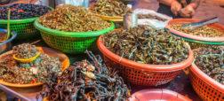 خوراک رتیل؛ غذایی محبوب در شهر «سوکان» کشور کامبوج