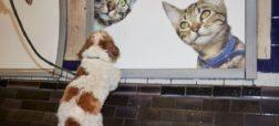 گربه ها تمام فضای یکی از ایستگاه های متروی لندن را اشغال کردند