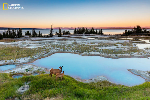 a-doe-and-her-fawn-survey-their-surroundings-in-yellowstone-national-park-w600