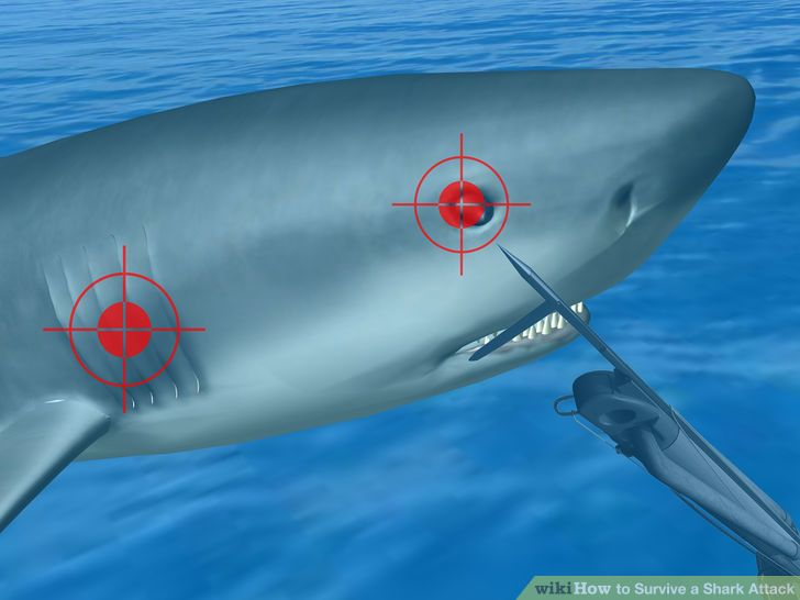 aid42848-728px-survive-a-shark-attack-step-4bullet1