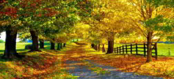 beautiful-autumn-pictures