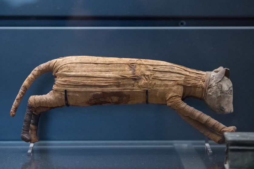 [عکس: cat-mummy-egypt.jpg.838x0_q80.jpg]