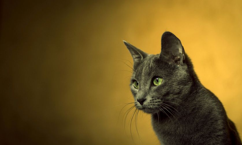 [عکس: cat-yellow-background.jpg.838x0_q80.jpg]