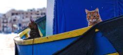 cats-on-a-boat-jpg-653x0_q80_crop-smart