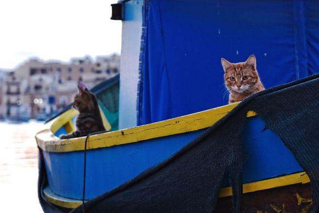 اجداد گربه ها از کجا آمده اند و چگونه در سرتاسر جهان پراکنده شدند؟