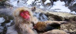 ۱۱ حقیقتی که درباره میمون ها نمی دانید