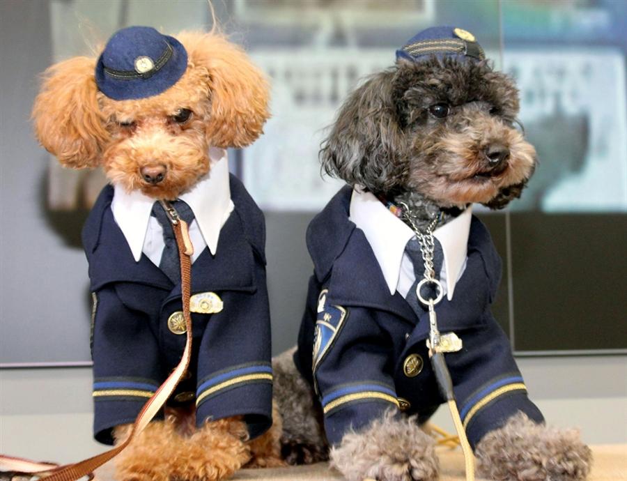 pb-120112-policedog-643p-photoblog900