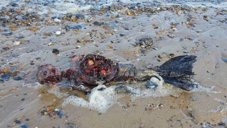 پیدا شدن جسد پری دریایی در یکی از سواحل انگلستان [تماشا کنید]