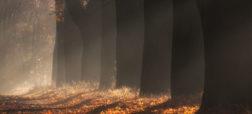 «کوچه افرا»؛ یکی از زیباترین مکان ها برای عکاسی از پائیز