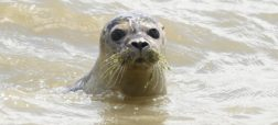 482188622-young-seal-lie-swims-in-the-sea-on-the-island-juist-jpg-crop-promo-xlarge2