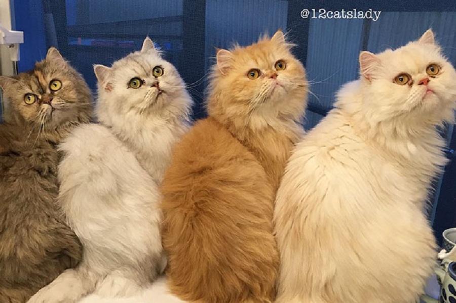 زنی با ۱۲ گربه یکی از پر بازدیدترین های اینستاگرام است