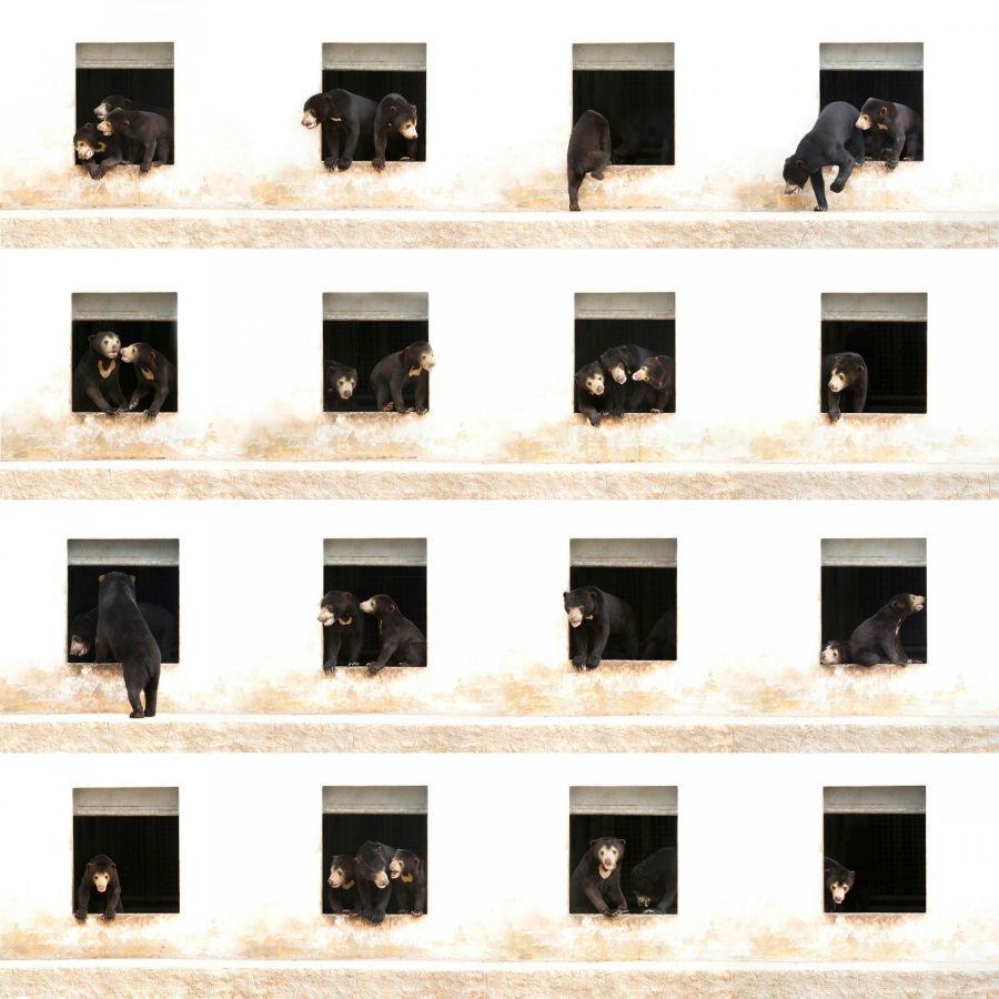 «خرس های آپارتمان شماره 6»؛ این تصویر ترکیبی از 16 عکس است که از یک نمای ثابت در حالت های مختلف توسط عکاسی به نام «الکس سیرنز» گرفته شده و با هنرمندی در کنار هم چیده شده اند تا نمایی مسحور کننده از حرکات خرس ها در یک آپارتمان را به تصویر بکشد.