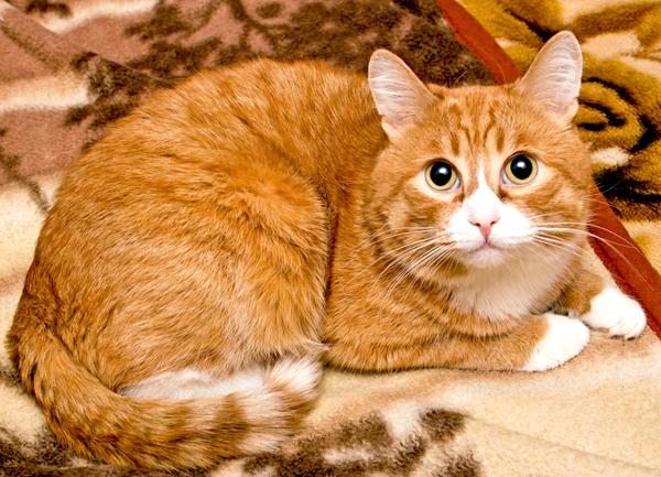 گربه ها شما را مانند یک هم نوع اهلی غول پیکر می بینند