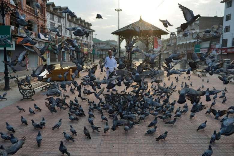 بازداشت پرنده ای مشکوک در هند؛ کبوتری که پیغامی تهدید آمیز برای نخست وزیر به همراه داشت