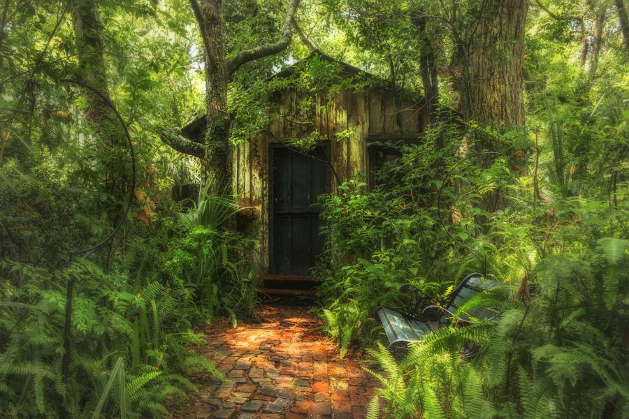 3. «خانه کوچک من» / عکاس: lostlenscap / کلبه ای کوچک و خصوصی در دل جنگل های سن آگوستین در فلوریدا