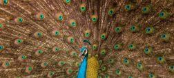 نگاهی به بهترین تصاویر «مسابقه جهانی عکاسی سونی»