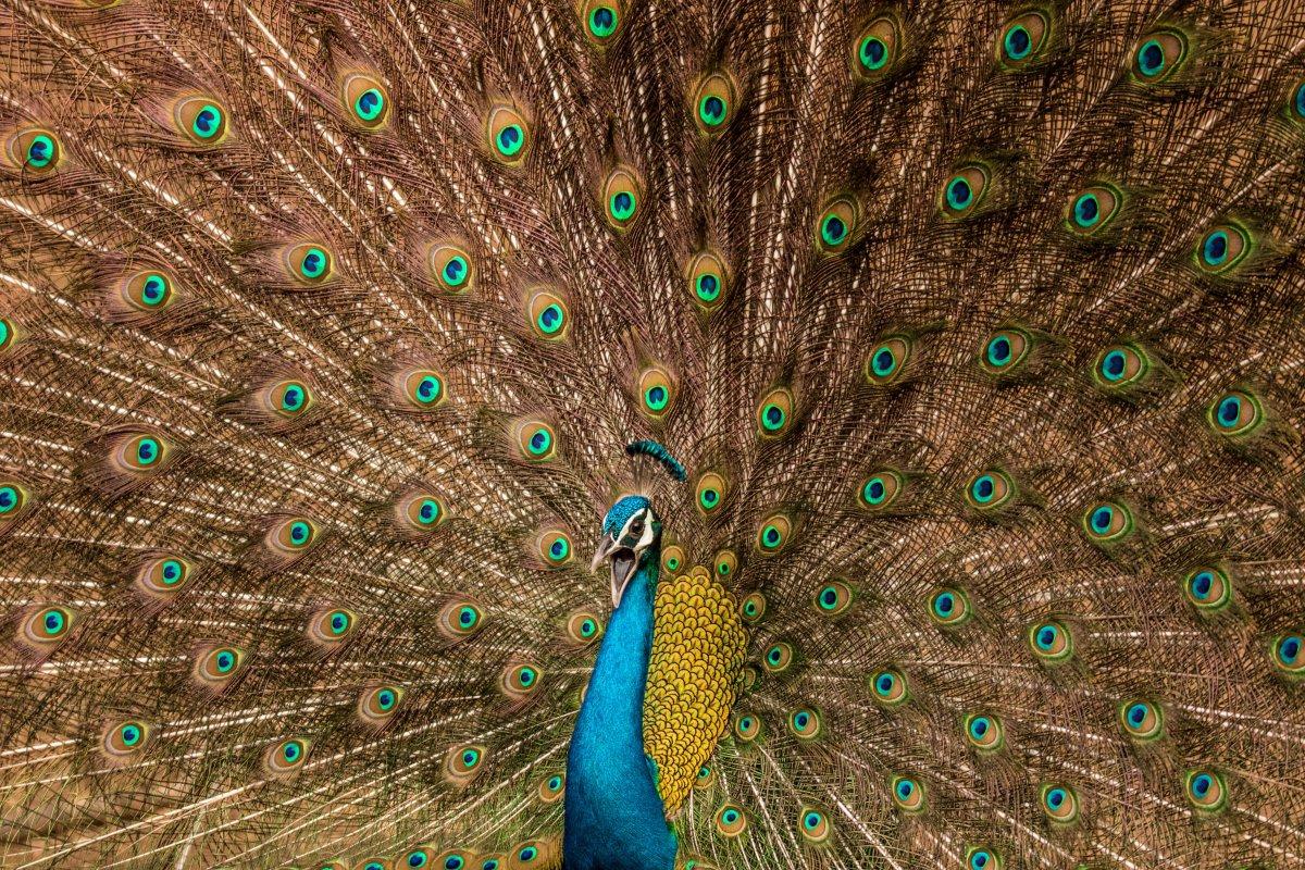 این عکس برای رده بندی «حیات وحش» ارسال شده و در جنگل های جیپور در هند در طول فصل باران برداشته شده است.