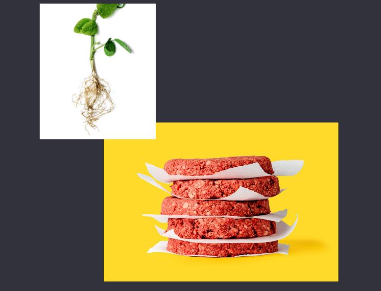 نگاهی به رویای بعدی بیل گیتس؛ برگرهای گیاهی با ظاهر و طعمی مشابه برگرهای واقعی