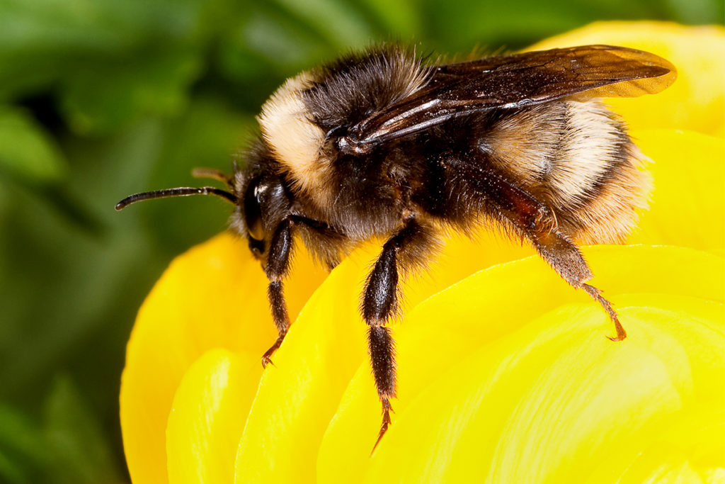 زنبورها می توانند ترفندهای مختلف را به یکدیگر یاد دهند