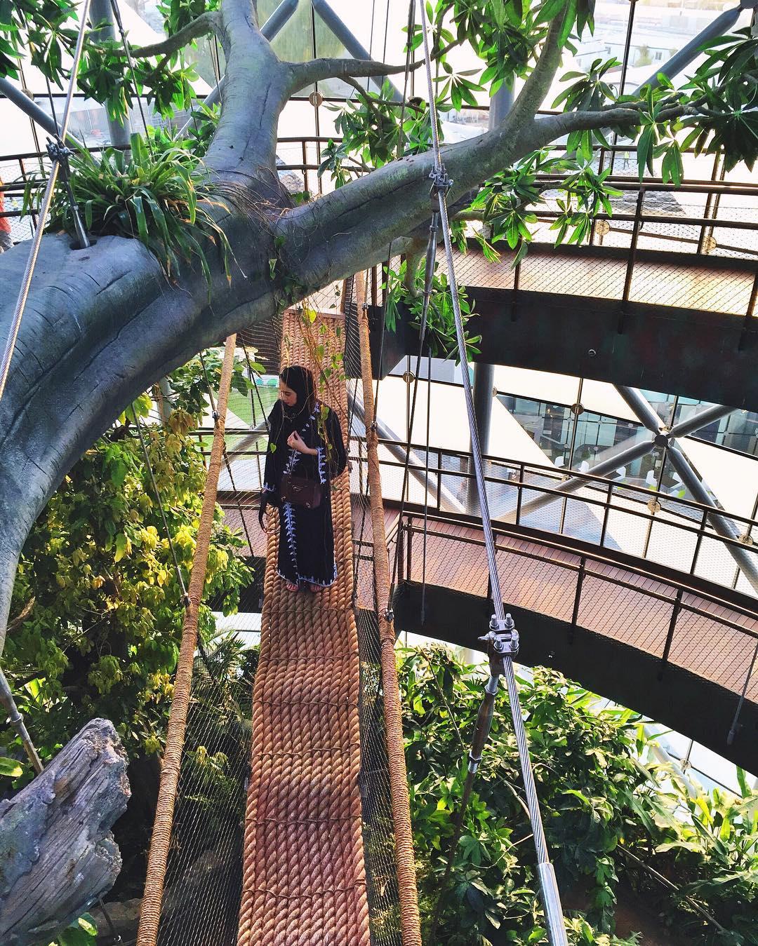 برای نزدیک شدن به درخت، بازدیکنندگان می بایست از پُلی طنابی که از دو سمت به سکوهای خارجی ساختمان متصل شده است، عبور کنند.