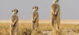 تصاویر زیبایی که برای مسابقه بهترین عکاس طبیعتِ نشنال جئوگرافی ارسال شده اند