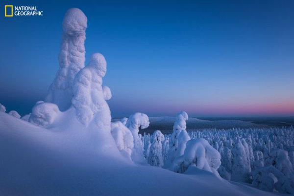winterland-w600