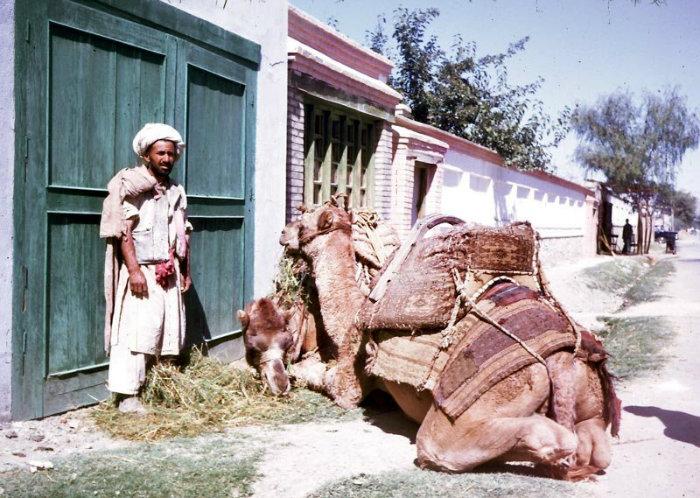 afghan-46