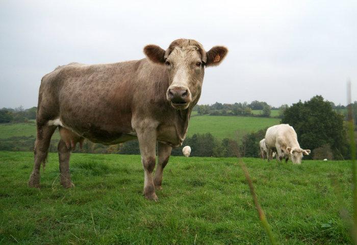 """کریس دیویس -مدیر تحقیقات و توسعه درشرکت """"غذای غیرممکن"""" به بیزینس اینسایدر گفت: اصلا دلیلی وجود ندارم که بتوان بر اساس آن خود را متقاعد کرد گاو بهترین منبع تولید گوشت هستند."""