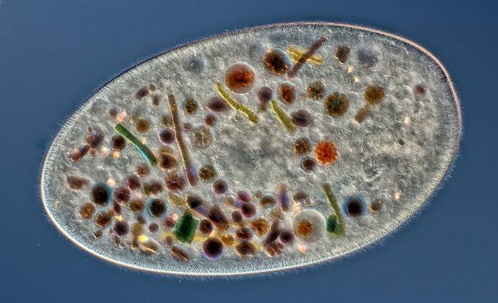 microscope-58