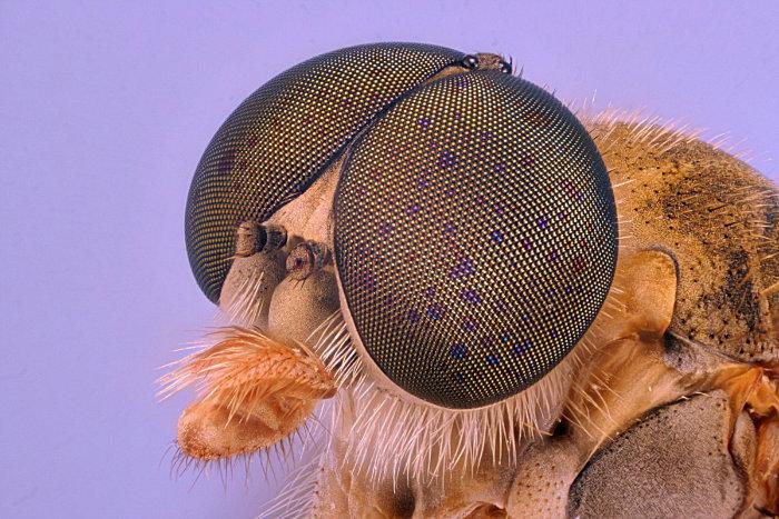 microscope-70