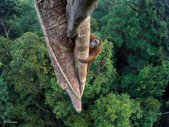 wildlife-photographer-of-the-year-1