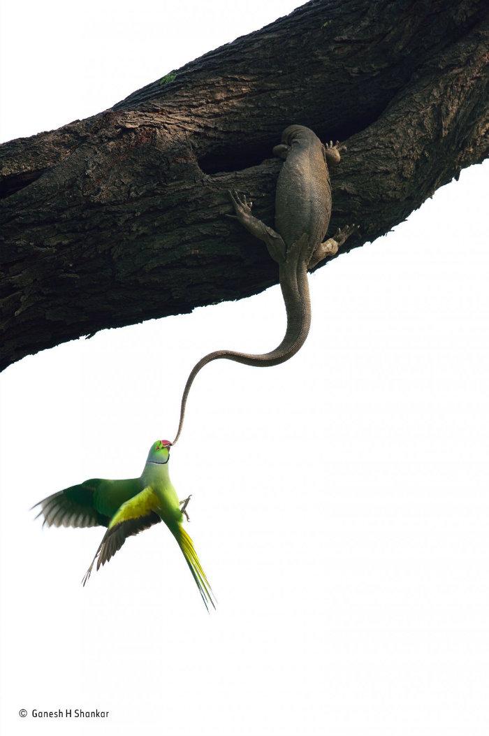 wildlife-photographer-of-the-year-10