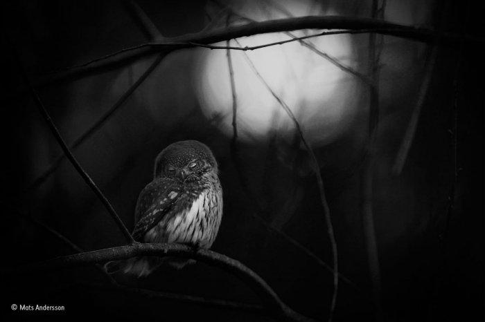 wildlife-photographer-of-the-year-7