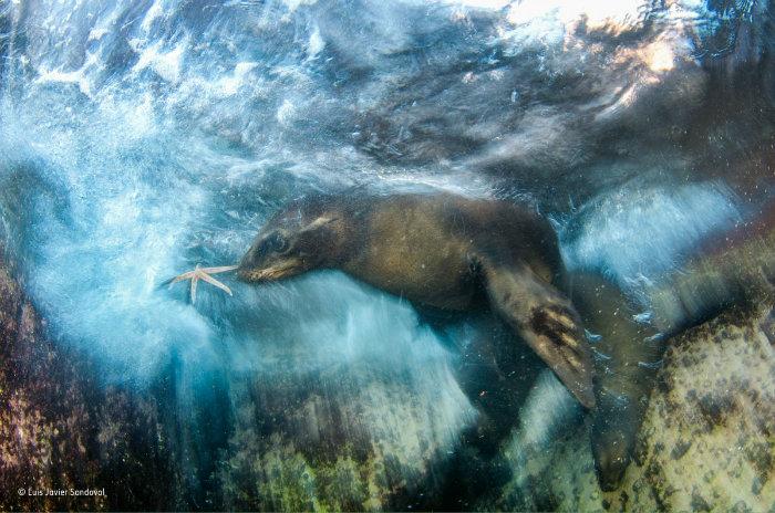 wildlife-photographer-of-the-year-9
