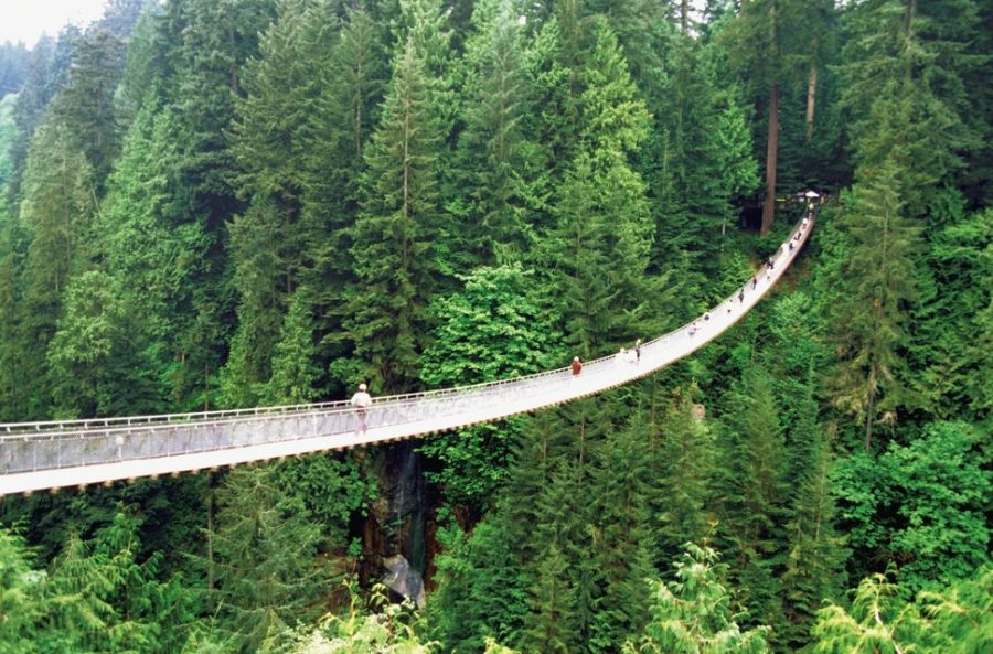 High angle view of Capilano Suspension Bridge and trees, Vancouver, British Columbia, Canada