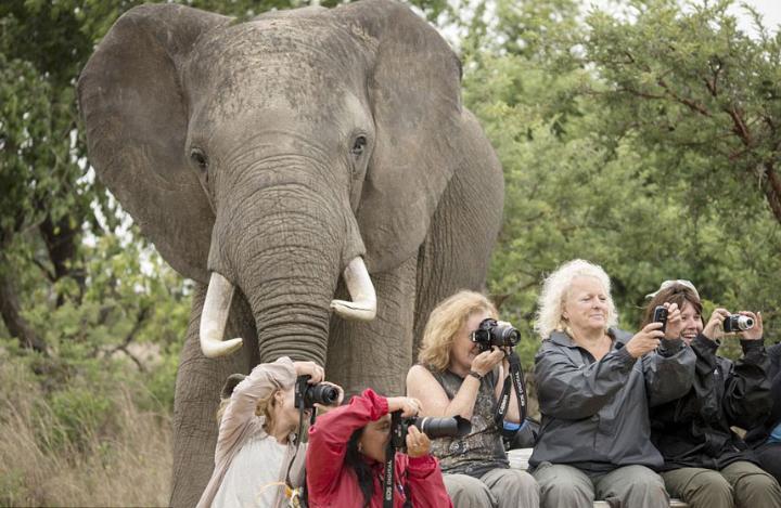 گردشگران در حیات وحش زیمباوه به شدت غرق عکاسی خود از زاویه روبه رو هستند و حواسشان نیست که یک فیل غول پیکر پشت سرشان ایستاده و نظاره گر عکاسی آنهاست.