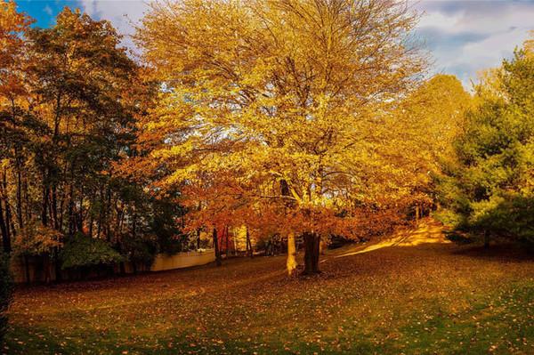 حیاط فوق العاده زیبای خانه که زیبائی های طبیعی آمریکا را به خوبی به تصویر می کشد.