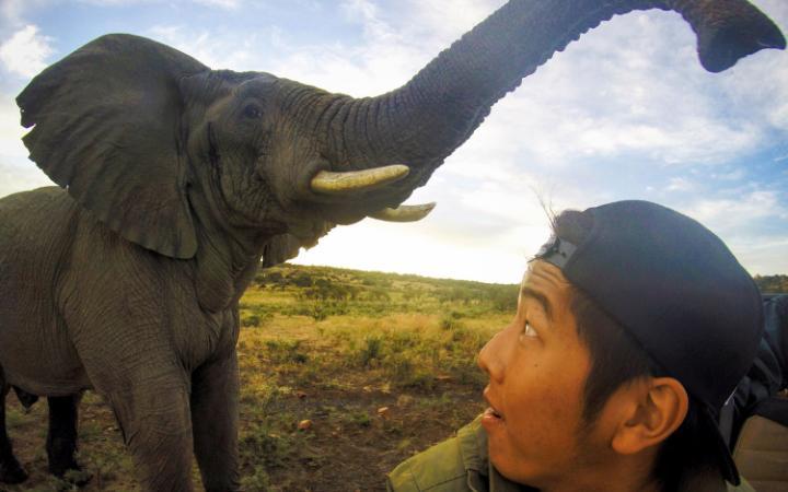 یک گردشگر آمریکائی به نام توماس چان، در سفر خود به سافاری آفریقای جنوبی، وقتی قصد داشته از خودش و فیلی که در فاصله از وی قرار داشته، سلفی بگیرد، حیوان به طور ناگهانی نزدیک شده و موجب وحشت زیاد این جوان 20 ساله می شود.