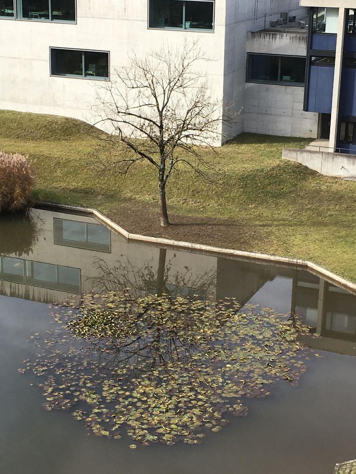 سایه بی نظیر درخت در آب